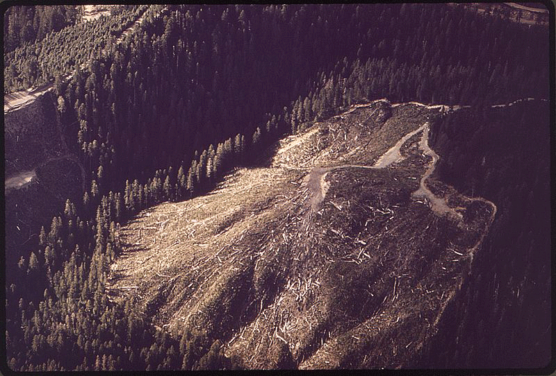 Forest clear cutting. Photo: Tomas Sennett, 1972,  Environmental Protection Agency, Public Domain
