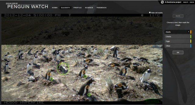 penguin-watch