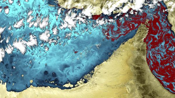 red-tide-gulf