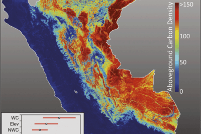 The geography of aboveground carbon density (ACD) throughout Perú, derived at a 1-ha resolution with uncertainty reported for each hectare. Source: Asner et al, 2014.