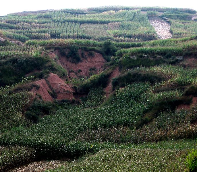 Rain runoff ha carved deep gulleys on this unterraced upland farm. Soil erosion is a serious problem in the humid tropics. Location: near Kunming, Yunnan Province, PRC. Photo: Wiki Commons, 2008.