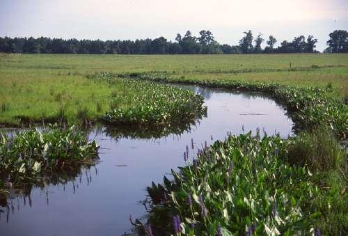 A riparian meadow taken in the Southern Coastal Plain Ecoregion (FL) in May 2003.