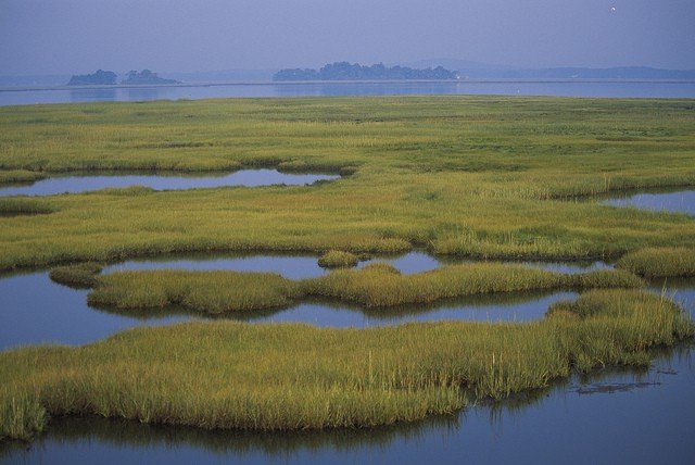 Coastal wetlands at Parker River National Wildlife Refuge in Massachusetts. Photo: Kelly Fike/USFWS