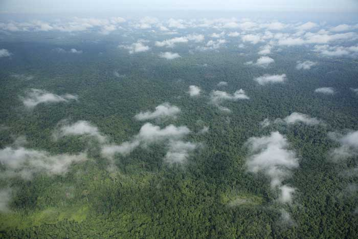 View of the Prey Lang Forest in 2008. Source: Prey Lang Community Network, Wikimedia Commons.