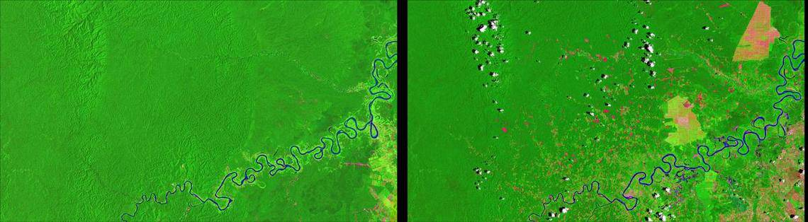 Satellites like those in the Landsat program help to monitor changes affected by the interactions of humans on Earth.  Imagery captured by Landsat 5 and Landsat 8 captured changes in the Peruvian Amazon forest over time due to small-scale agriculture.  Image: USGS, public domain.