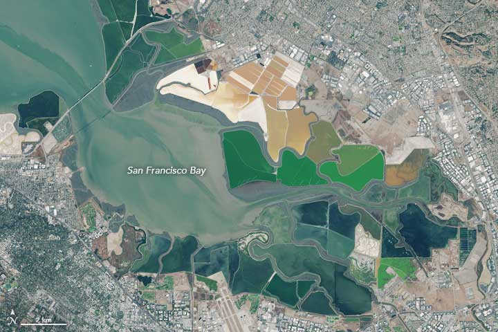 On October 31, 2015, the Operational Land Imager (OLI) on Landsat 8 captured a natural-color image (top) of the southern end of San Francisco Bay. Image: NASA.