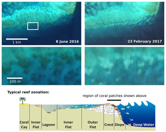 Images from the Copernicus Sentinel-2A satellite captured on 8 June 2016 and 23 February 2017 show coral turning bright white for Adelaide Reef, Central Great Barrier Reef. Image: contains modified Copernicus Sentinel data (2016–17), processed by J. Hedley; conceptual model by C. Roelfsema