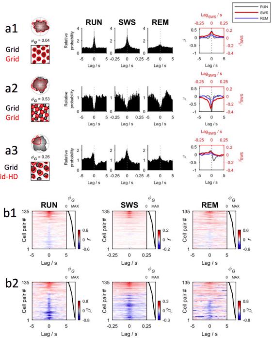 Measurements of medial entorhinal cortex activity across awake state of navigation (RUN), slow-wave sleep (SWS), and rapid eye movement sleep (REM). Source: Gardner et. al., 2017).