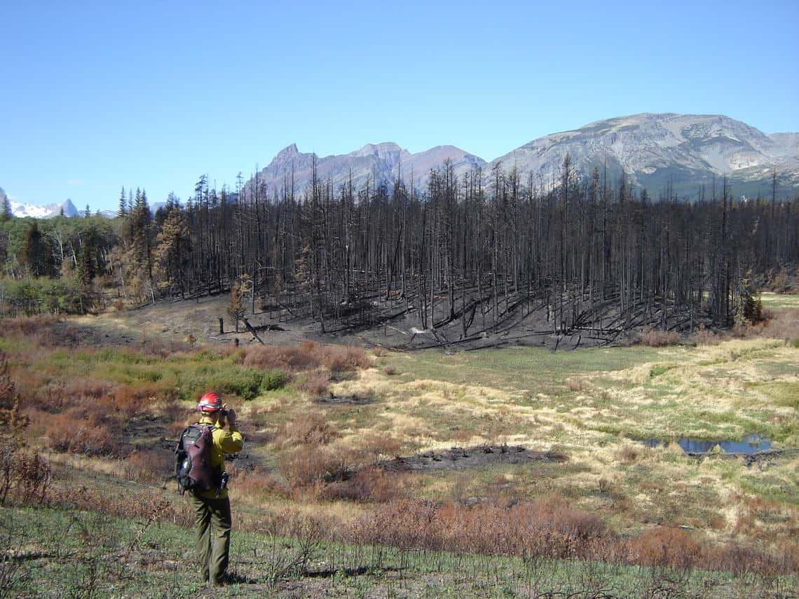 A fire ecologist studies the Red Eagle Fire in Montana, 2007. Photo: USGS, public domain.