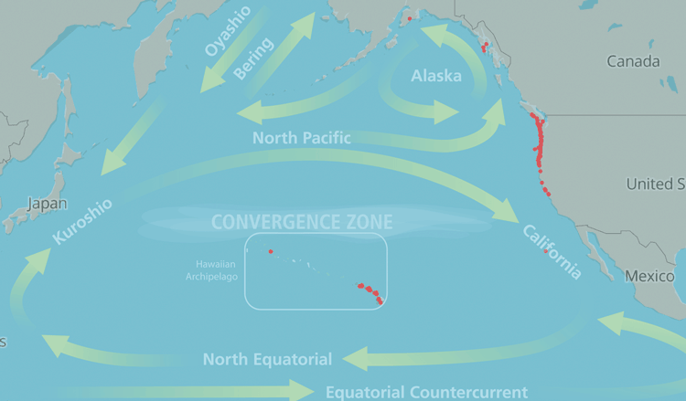 Geolocated marine species with the major components of the North Pacific Ocean gyre current system. Map adapted from Carlton et al. and overlaid with gyre map from NOAA.