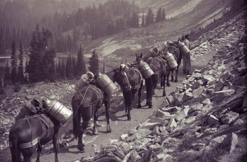 Horse train carrying canisters of fish for lake restocking. Photo: Mount Rainier National Park Archives, Date unknown