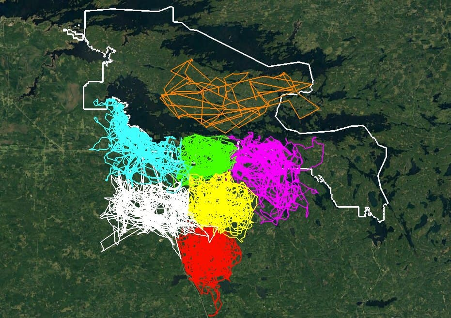 GPS data locations collected by the Voyageur Wolf Project team.