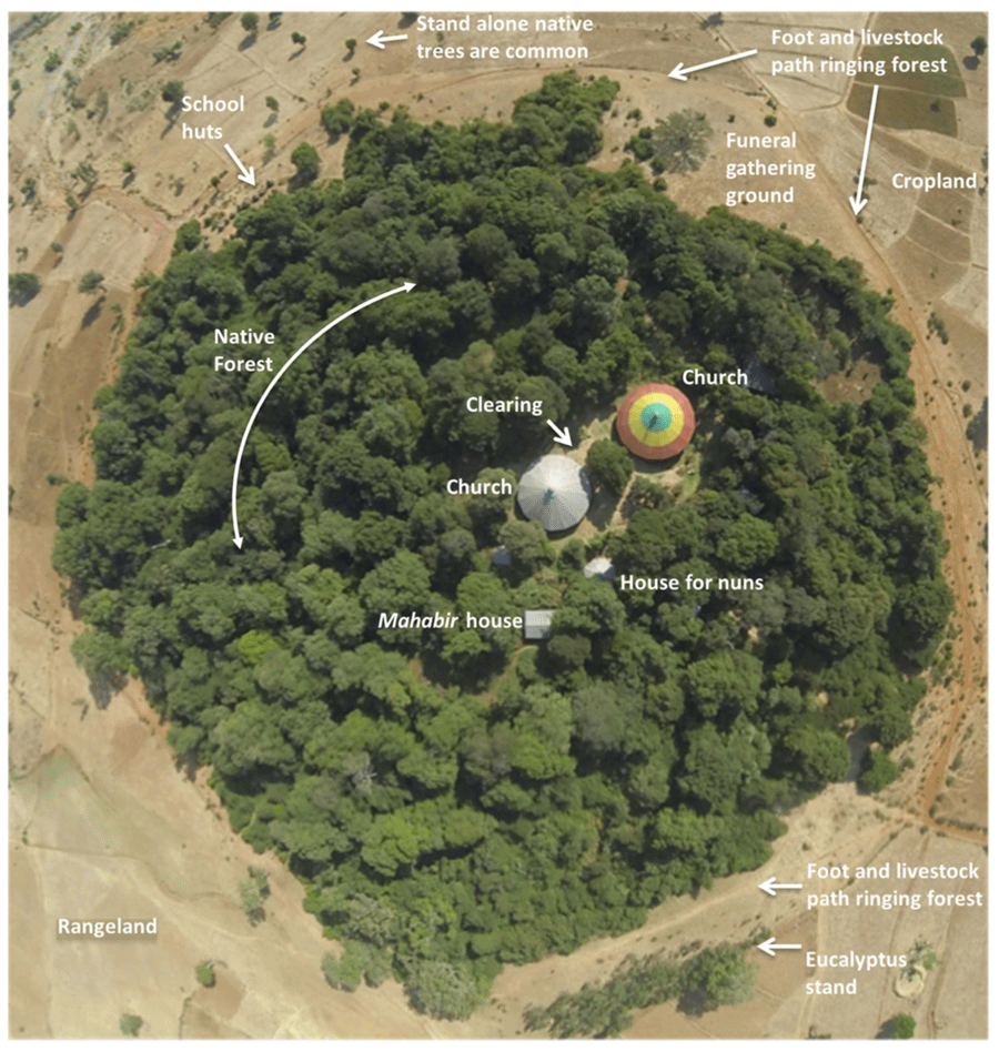 An annotated aerial of a church forest in South Gondar, Ethiopia. Source: Klepeis et al., 2016