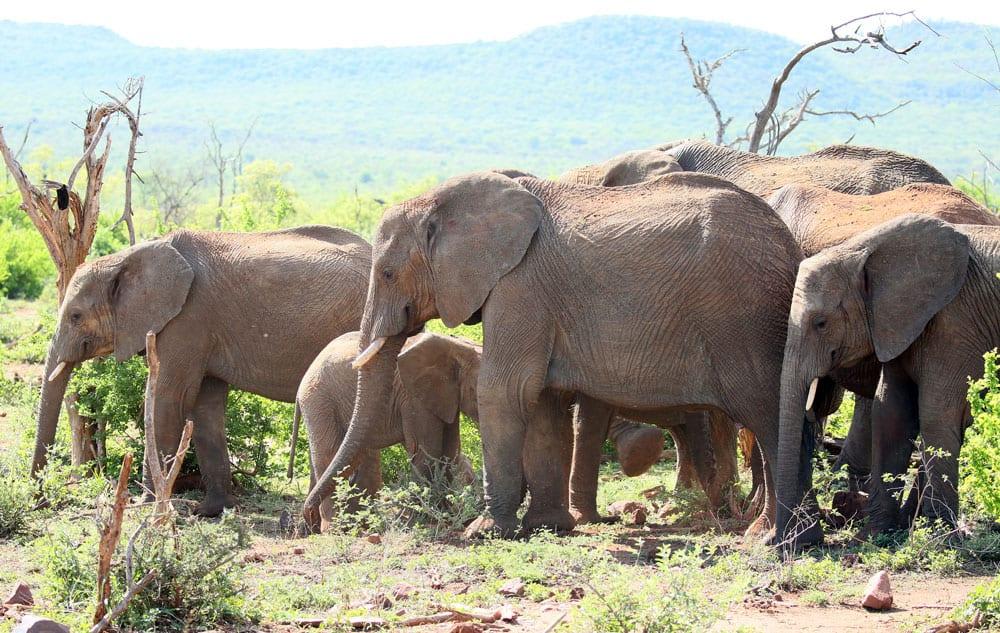 Mosetlha Bush Camp, Madikwe Game Reserve. Photo: flowcomm, CC BY 2.0
