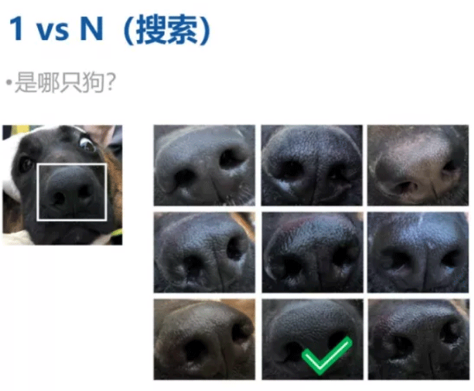 Magvii's dog nose pattern recognition.