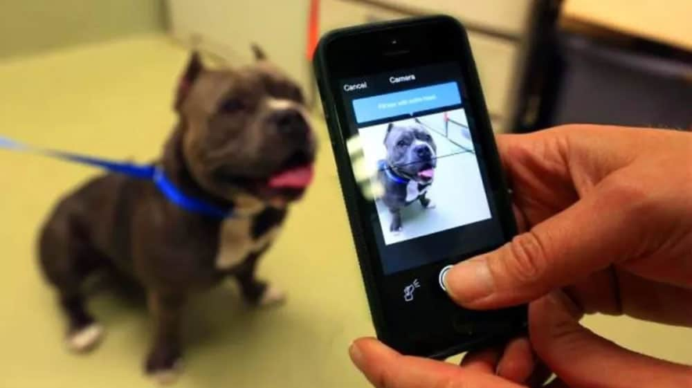 Magvii's AI dog tracking app captures the unique ridge pattern on a dog's nose.