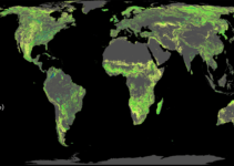 Mapping Where Planting Trees Can Help with Climate Change Mitigation