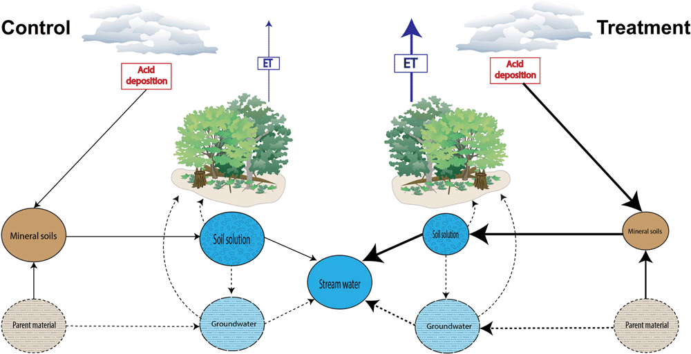In this study, forests treated with acid rain components leached more minerals from the soil which in turn affected the ability of trees to retain moisture.  The thickness of the lines and sizes of the pools show relative differences between the control and treatment tree plots.  Figure:  Lanning et al., 2019.
