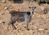 How Goats in Samothraki are Increasing Landslides