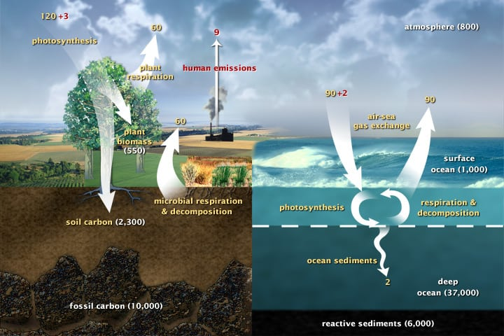 iagram of the fast carbon cycle shows the movement of carbon between land, atmosphere, and oceans.(Diagram adapted from U.S. DOE, Biological and Environmental Research Information System.)