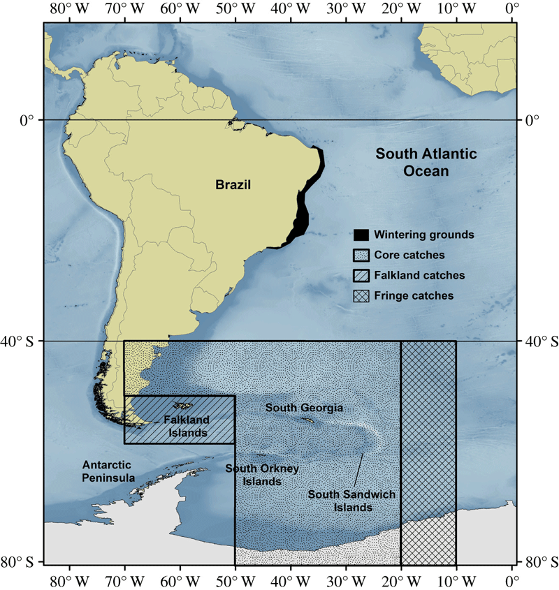 Map showing western South Atlantic (WSA) humpback whales (Megaptera novaeangliae) population range in the wintering grounds and areas for allocation of catches in the feeding grounds. Source: Zerbini et al., 2019.