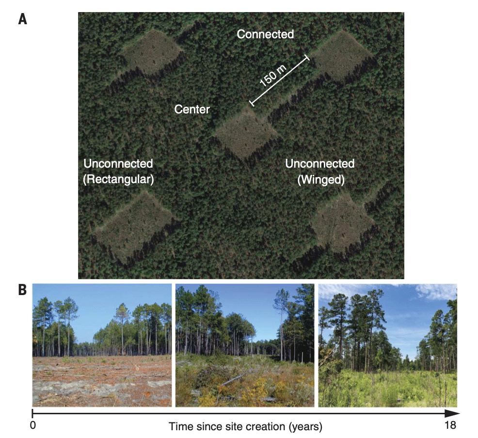 A long-term habitat connectivity experiment. Source: Damschen et al., 2019.