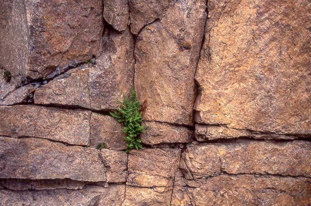 Precambrian metamorphic rock wall in Lamar Canyon. Yellowstone National Park, Photo: Jim Peaco, NPS, public domain