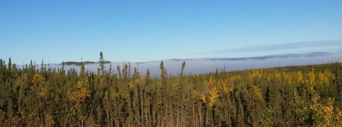 """Research found that """"fast early growth strongly selects against trees reaching old age"""" for Black Spruce (Picea Mariana)  trees.  Black spruce dominated forest near the Yukon River.  Photo: Bruce Wylie, USGS, public domain"""