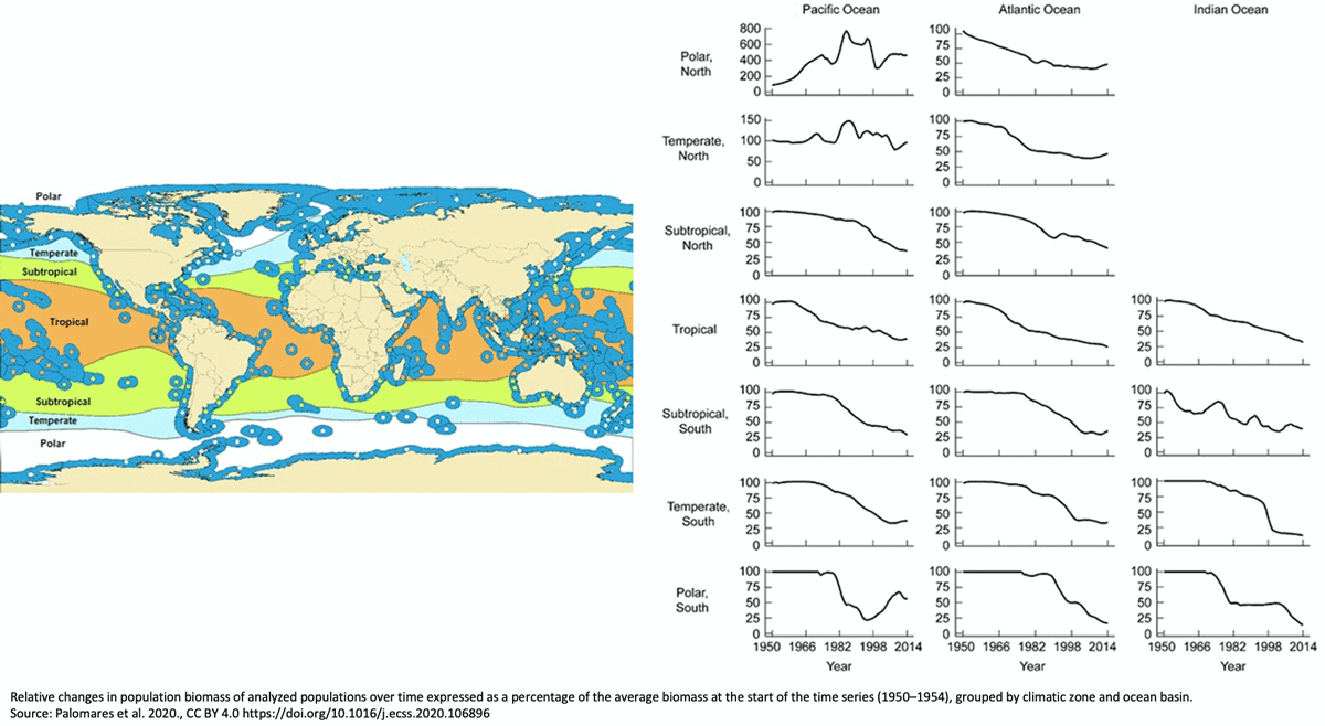 Map: The global system of Marine Ecoregions (ME in dark blue, Spalding et al., 2007) overlaid over climatic zones of the world (Anonymous, 1991). Graphs: Relative changes in population biomass of analyzed populations over time expressed as a percentage of the average biomass at the start of the time series (1950–1954), grouped by climatic zone and ocean basin. Figure: Palomares et al., 2020, CC BY 4.0