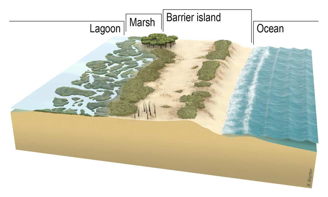 Diagram showing  the cross-section of a barrier island progressing from ocean (on the right) to marsh and then lagoon (on the left).  Image: Betsy Boynton, Cherokee Nations Technologies, contracted to the USGS. Public domain.